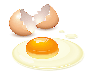 picture of an egg shell and egg cracked open